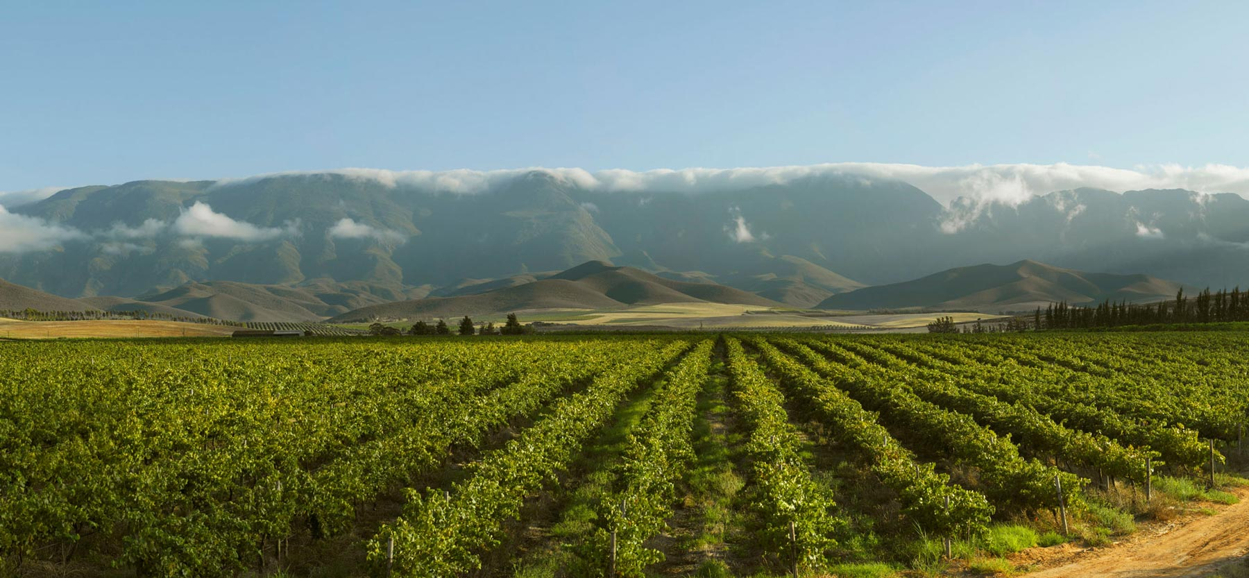 Vineyards and mountains around McGregor